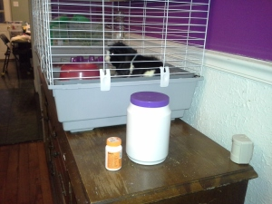 Photo of Elvis the guinea pig in his cage.  The cage sits on a sideboard, and a bottle of vitamins and a bottle of food pellets are immediately next to the cage.
