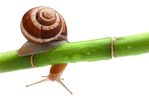 Snail on a bamboo stem.  Image from Free Vector Graphic Download