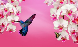 Hummingbird and white orchids with butterfly by IvaCastro on Pixabay at https://pixabay.com/en/white-orchid-orchid-pink-914977/