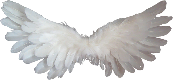 Angel wings by DigitalDesigner on Pixabay at https://pixabay.com/en/white-angel-wings-feather-heaven-1184178/