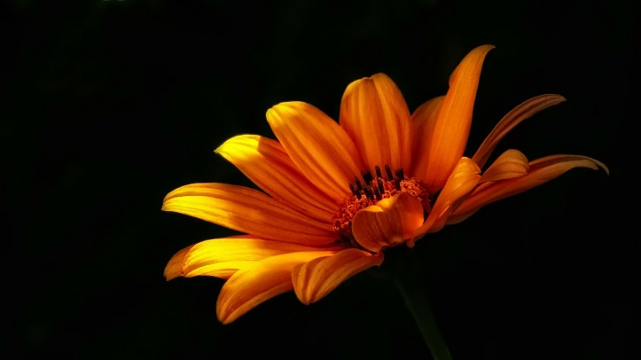 Flower by PeterDargatz on Pixabay at https://pixabay.com/en/flower-wild-flower-flowers-nature-52358/