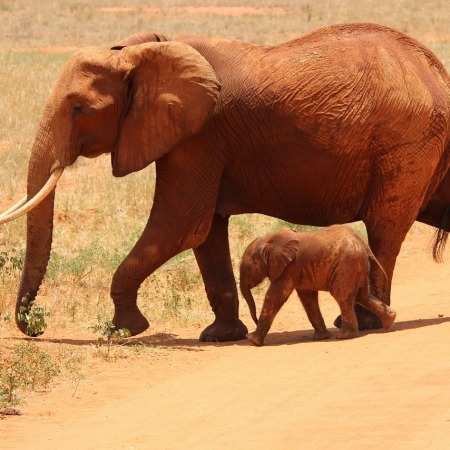 Mama and baby African elephants by Kikatani on Pixabay at https://pixabay.com/en/elephant-cub-tsavo-kenya-savanna-175798/