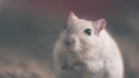 Image of a muse by Unsplash on Pixabay at https://pixabay.com/en/mouse-rodent-animal-rat-white-801843/